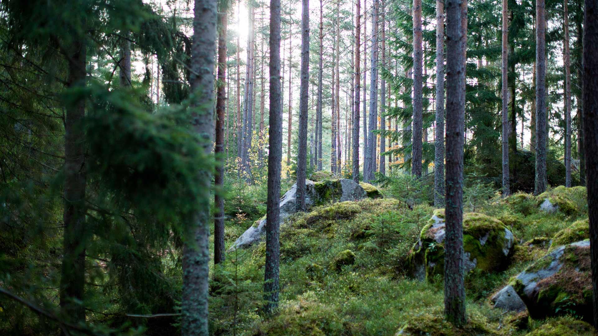Aringsås platsen